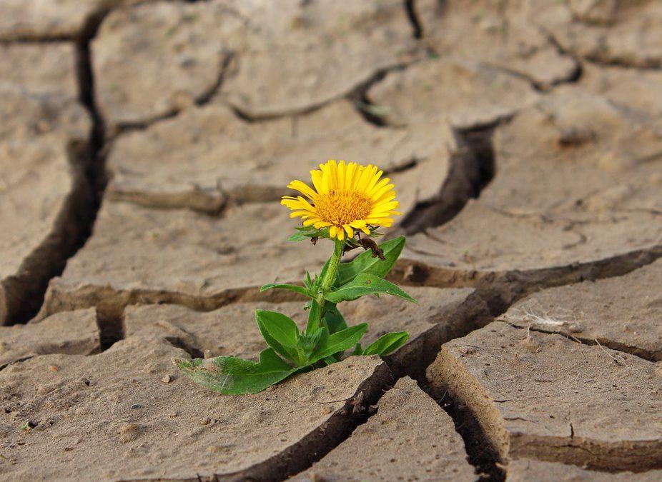 Cómo liberarte de MIEDOS y ataduras, darte el PERMISO y comenzar a crear posibilidades en lugar de esperarlas